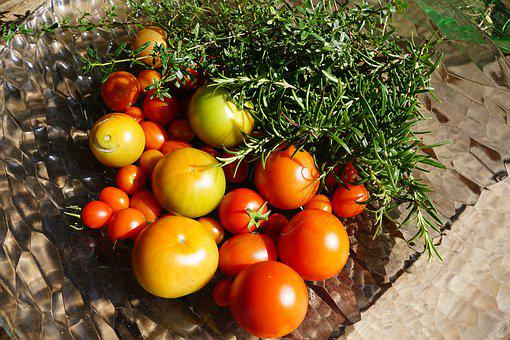 Tomatoes, Vegetables, Garden, Rosemary