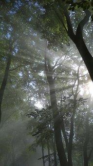 Forest, Light, Tree, Trees, Nature, Mood, Landscape