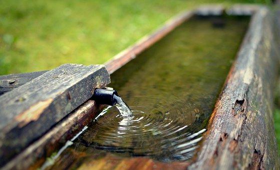 Water, Source, Desire, Crane, The Flow Of, Drinker