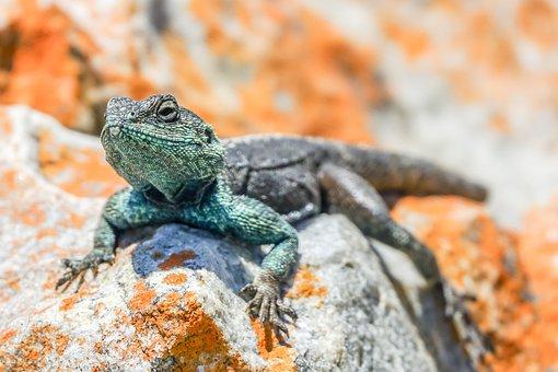 Lizard, Green, Reptile, Nature, Wildlife, Exotic