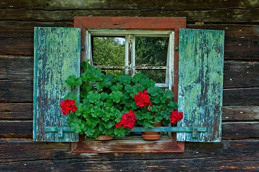 Window, Wooden Windows, Shutter, Flower, Window Sill