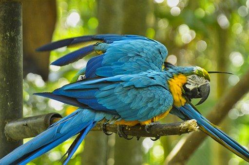 Parrot, Bird, Costa Rica
