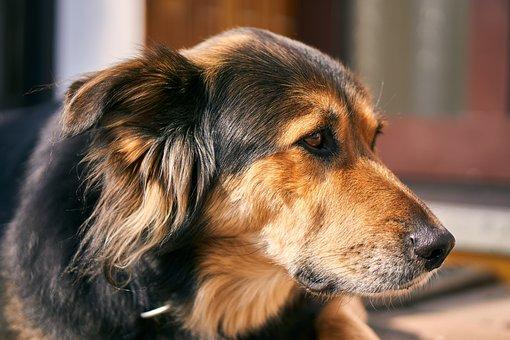 Dog, View, Cute, Watch, Look, Pet, Animal, Sweet