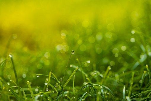 Grass, Drop Of Water, Dew, Raindrop, Drip, Green