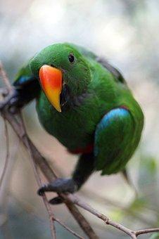 Parrot, Bird, Animal, Feather, Plumage, Bill, Eye