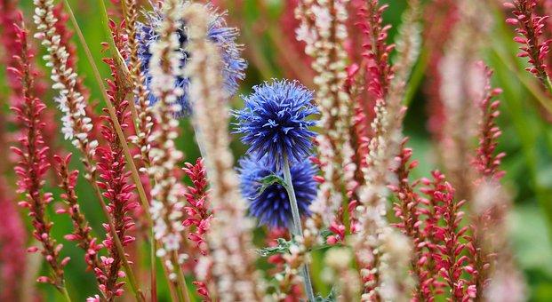 Flower, Red, White, Blue