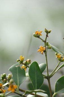 Kerala, India, Mangrove, Flower, Wild, Nature, Blossom