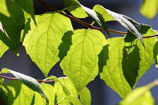 Leaves, Green, Light, Light On, Shadow, Structure