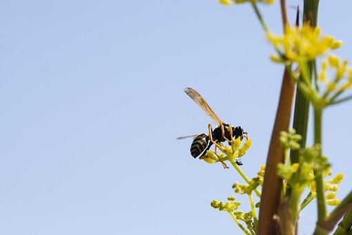 Wasp, Nature, Insect, Arthropod, Animal, Flower, Summer