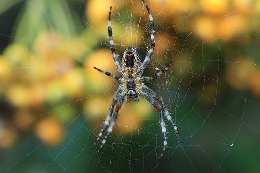 Spin, Autumn, Web, Spider Web, Animals, Nature, Bug