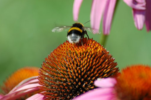 Pollinate, Pollinating Insects, Pollination, Pollen