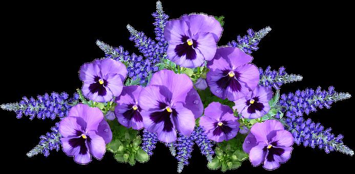 Flowers, Pansies, Purple, Arrangement, Cut Out