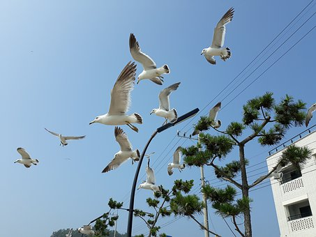 Seagull, Beach, Sea, Nature, Sky, New, Landscape