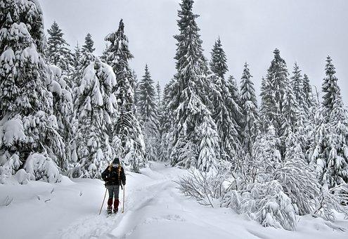 Winter, Skiing, Tourism, Snow, Cold, Skier, Mountains