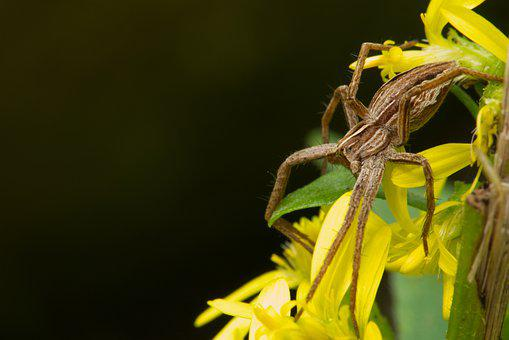 Spider, Animal World, Nature, Macro, Wolf Spider