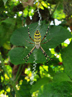 Insects, Spider, Nature, Spider Web, Animal, Cobwebs