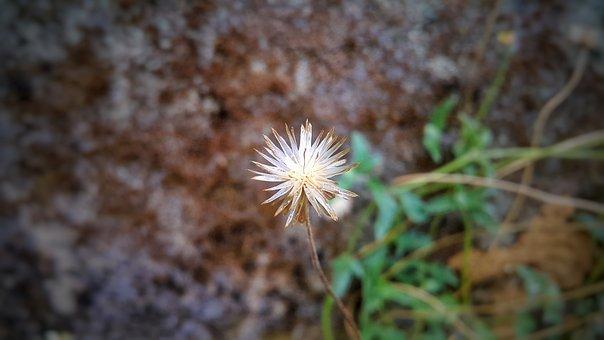 Sri Lanka, Grass Flower, Photography, Grass, Nature