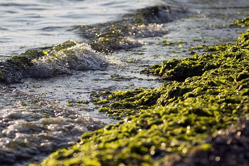 Sea, Algae, Wave, Beach, Side, Summer