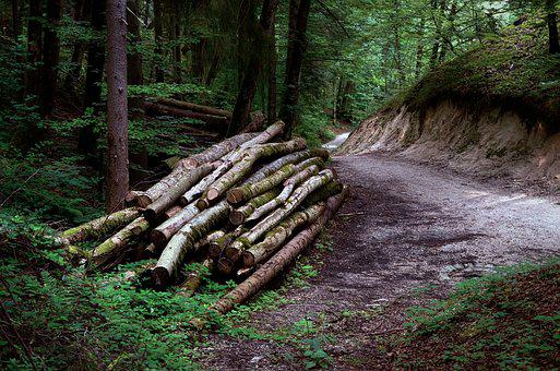 Wood, Forest, Forestry, Nature, Tree, Landscape, Summer