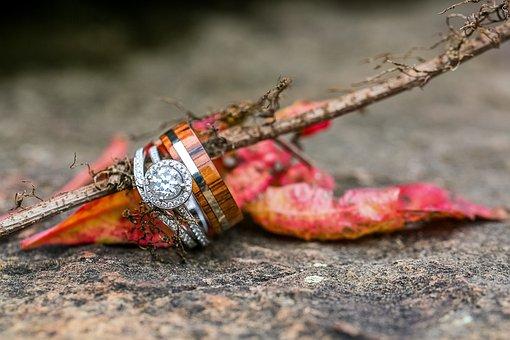 Diamond, Rings, Wedding, Nature, Leaf, Autumn, Stick