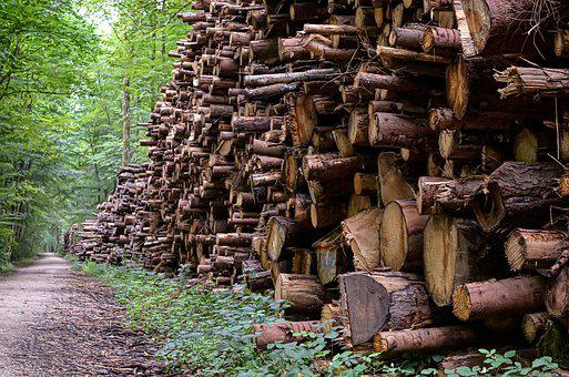 Wood, Forestry, Economy, Forest, Felling, Stack, Way