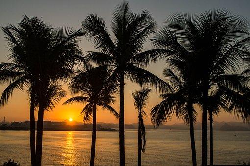 Coconut Trees, Coconut, Sol, Sunrise, Beach, Ocean