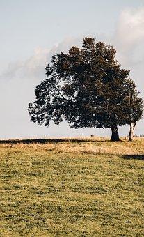 Tree, Beech, Summer, Deciduous Tree, Old Tree, Gnarled