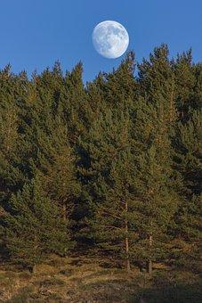 Moon, Forest, Dusk, Landscape, Night, Dark, Darkness