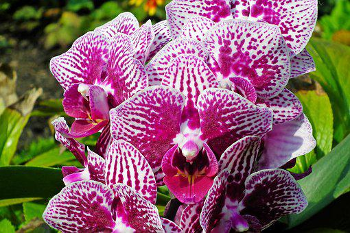 Orchids, Flowers, Colorful, Potted, Flourishing
