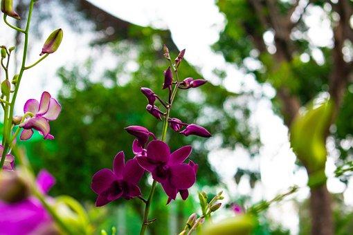 Flowers, Nature, Green, Forrest, Leaf, Leaves, Floral
