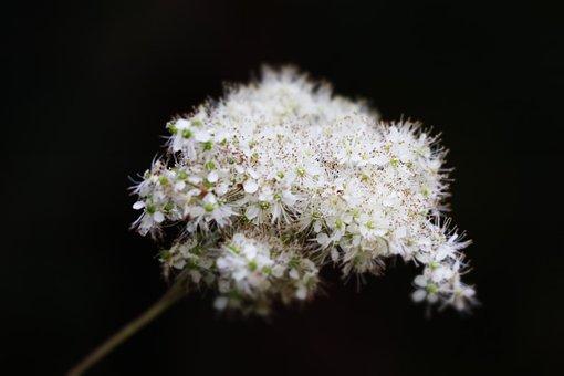 Fern, Field, Nature, Green, Plant, Landscape, Summer