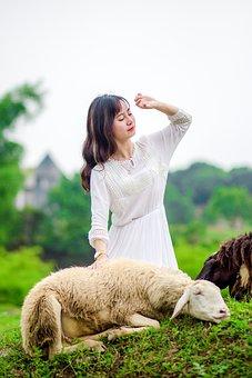 Girl, White Skirt, Sheep, Little Lamb On Tảm Grass