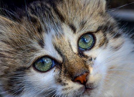 Cat, Gato, Pet, Animal, Kitty, Meow, Lovely, Adorable