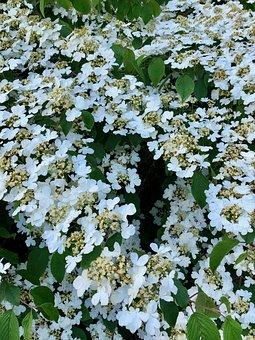 Flower, Bush, Nature, Spring, Garden, Bloom, Plant