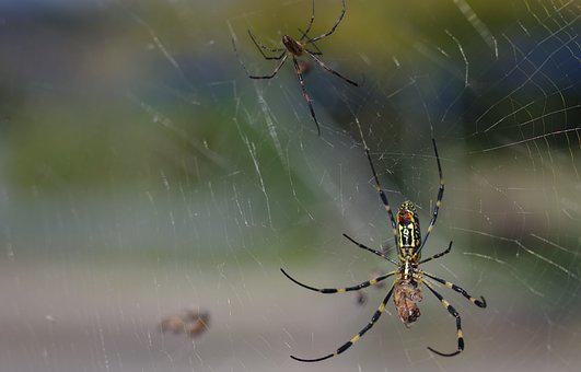 Spider, Web, Bug, Insect, Nature, Trap, Prey