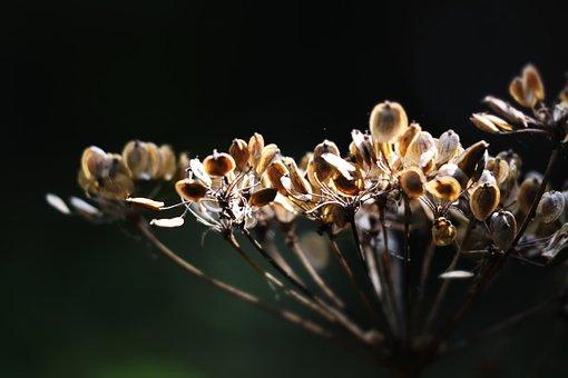 Macro Photography, Fern, Field, Nature, Green, Plant