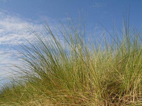 Clouds, Sky, Grass, Dune, Sand Dune, Baltic Sea