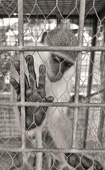 Monkey, Feelings, Sadness, Animal, Sorry, Human