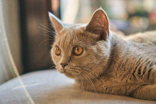 Cat, Sweet, Cute, Small, Baby, Young, Animal, Pet, Fur