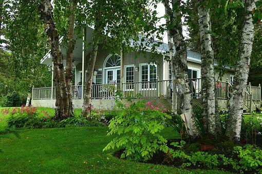Chalet, Nature, Wood, Country, Trees, Birch, Summer
