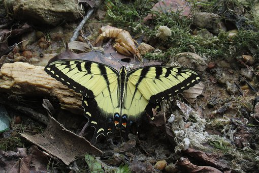 Yellow, Butterfly, Insect, Nature, Colorful, Wings