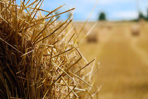 Bundle, Straw, Fields, Harvest, Agriculture, Nature