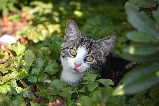 Cat, Mieze, Pet, Domestic Cat, Animal, Young Cat