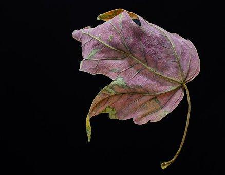Leaf, Autumn, Chroma, Colour, Dry, Dried, Fallen, Fall