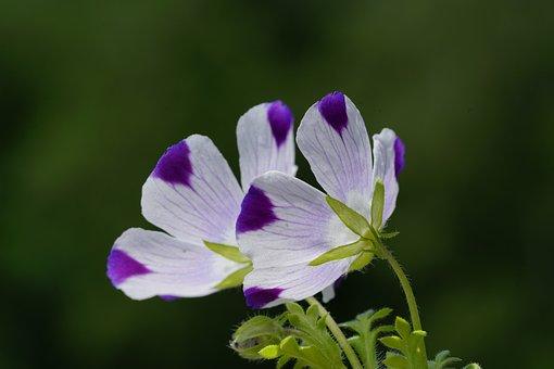 Flower, Blossom, Bloom, Grove Flower