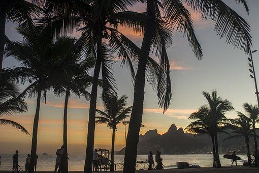 Coconut Trees, Coconuts, Coconut, Coconut Tree, Beach