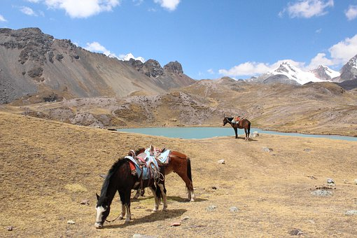 Horses, Landscape, Ausangate, Laguna