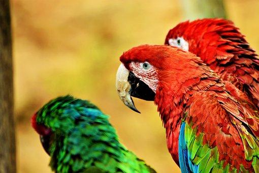 Bird, Zoo, Parrot, Animal