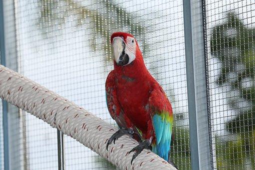 Parrots, Parrot, Colorful Couple Macaws