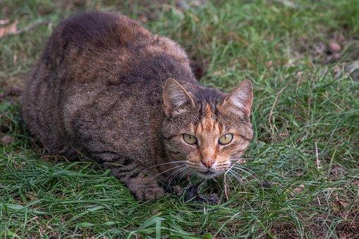 Cat, Prey, Animal, Hunting, Nature, Pet, Mole
